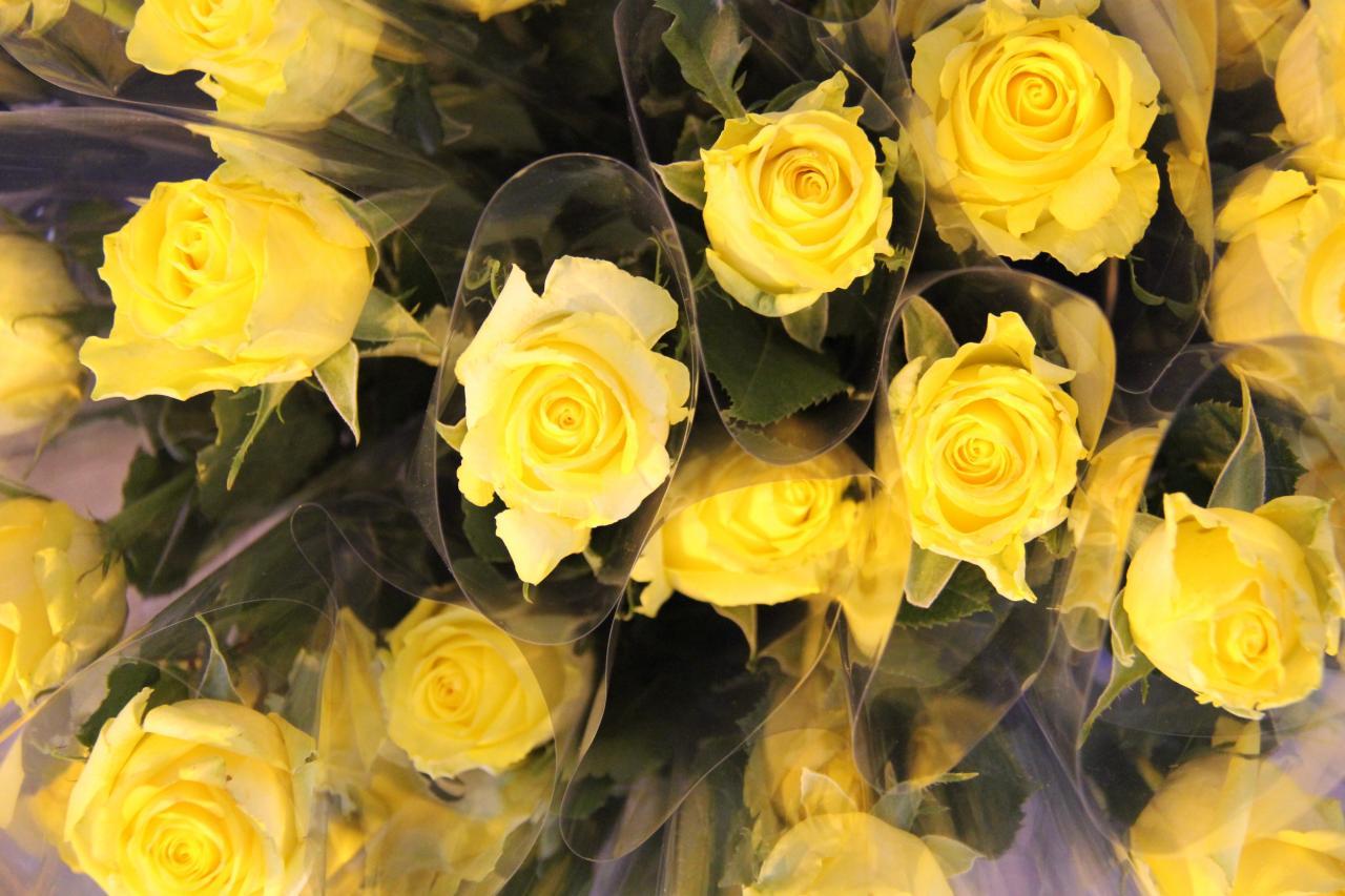 Les roses offertes aux filles qui ont remporté le titre.